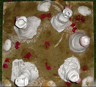 5 Shades of Bride (above angle)